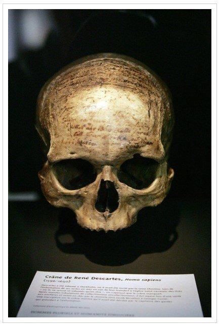 Imagen que contiene primate, homínido, mamífero, animal  Descripción generada automáticamente